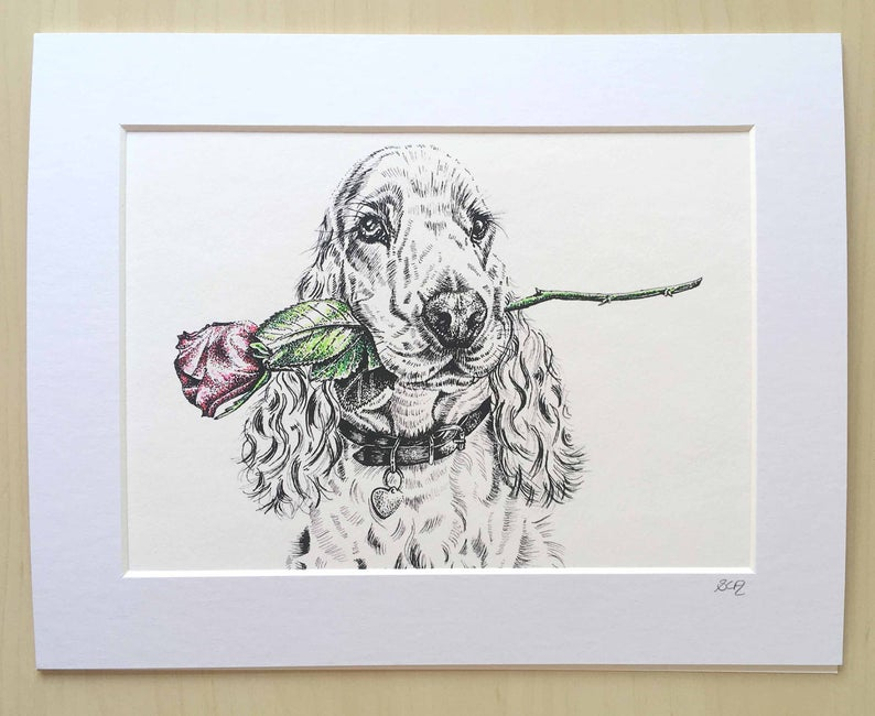 Sarah Cox Artworks SC129 Print Spaniel with Rose