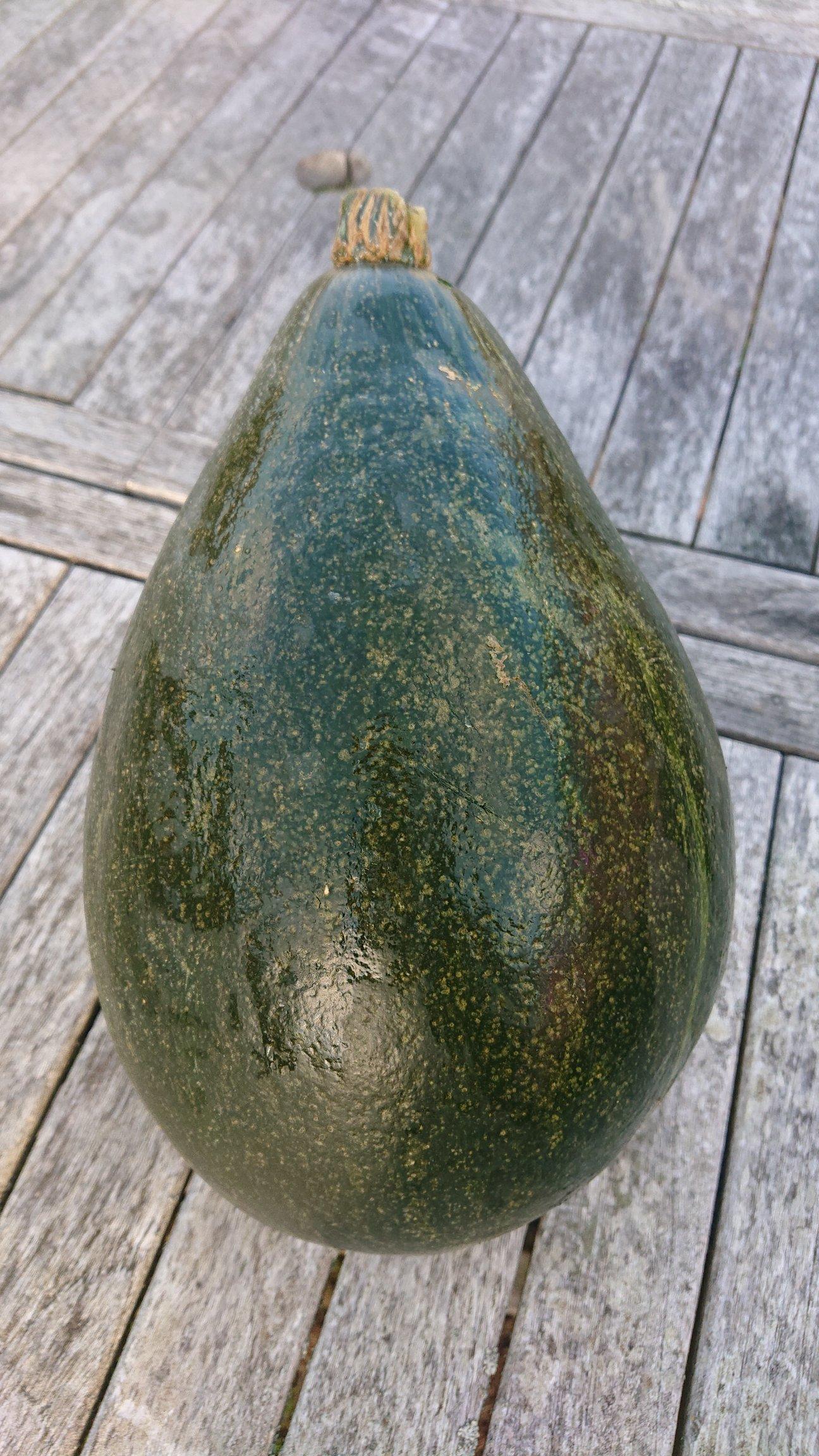 Kurpitsa 'Vert Olive', luomu