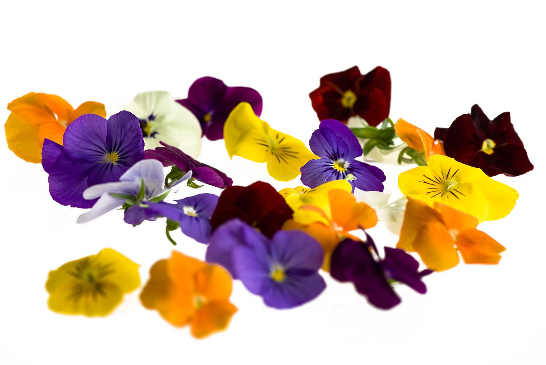 Syötävä kukka 10 kpl, luomu