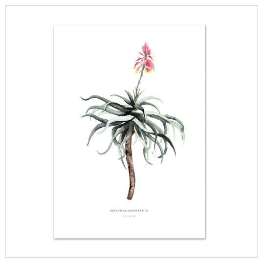 "Kunstdruck A 4 ""succulent"""