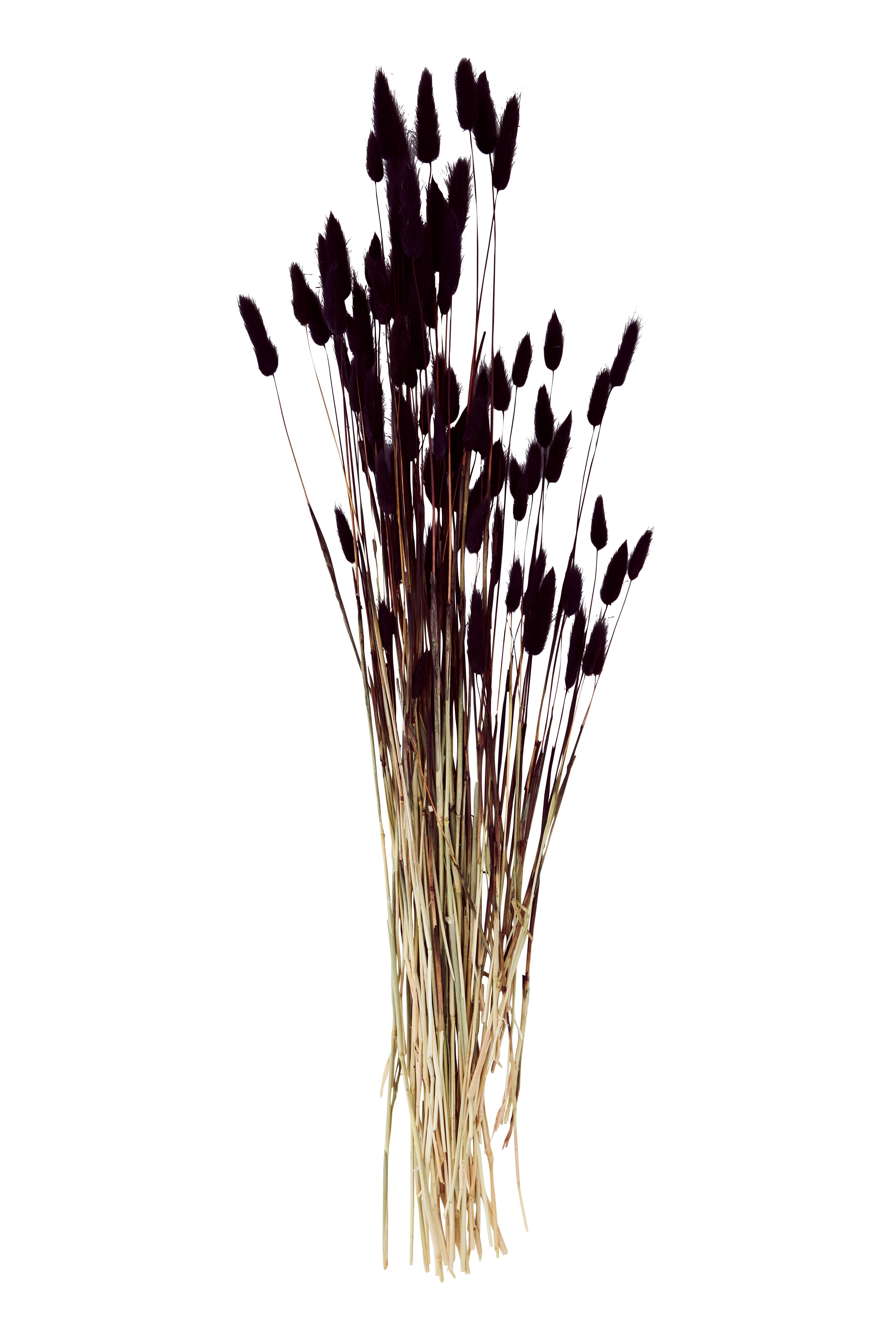 Samtgras / lagurus ovatus (verschiedene Farben)
