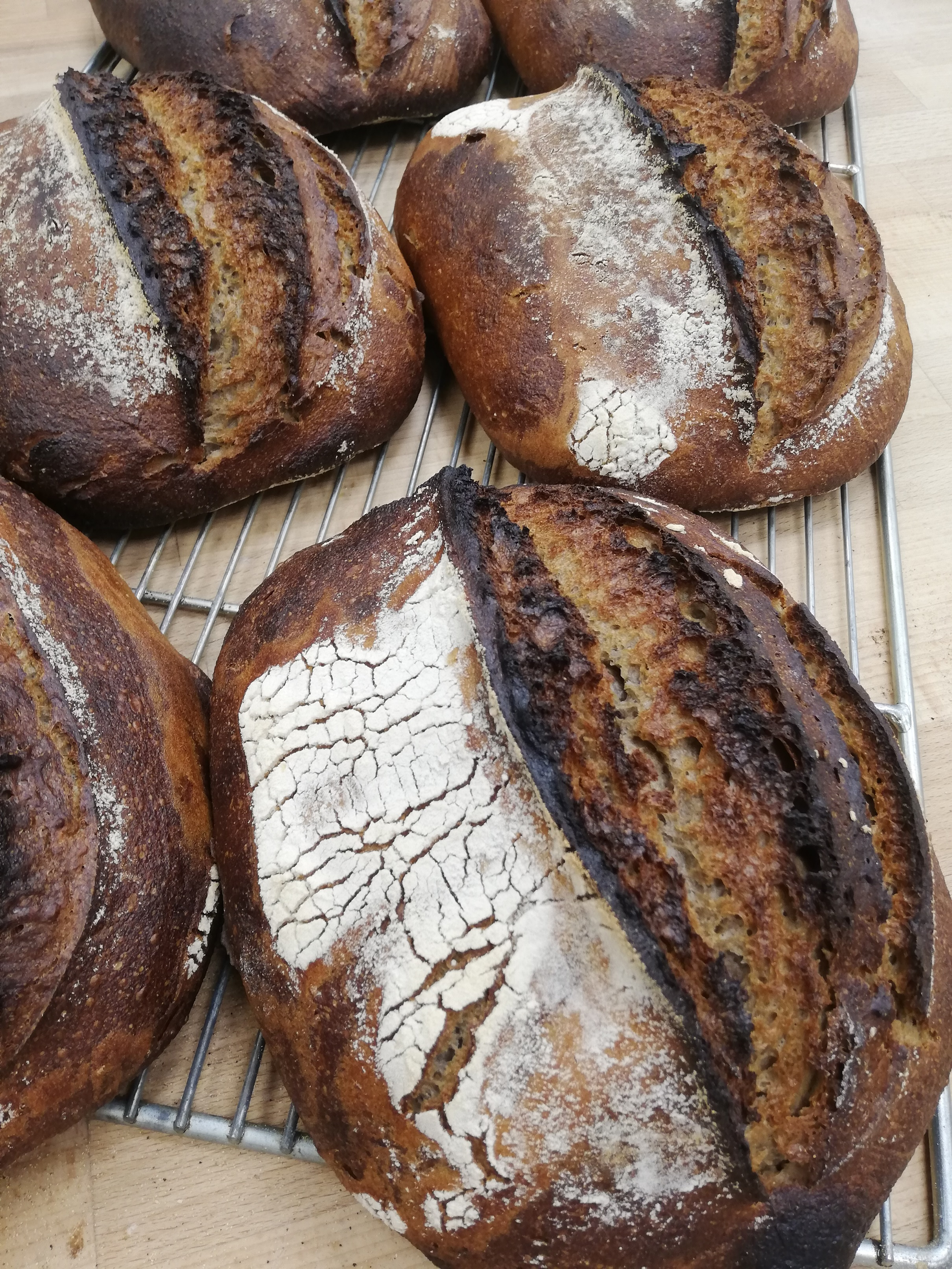 (WED) YQ Black Mountain Loaf
