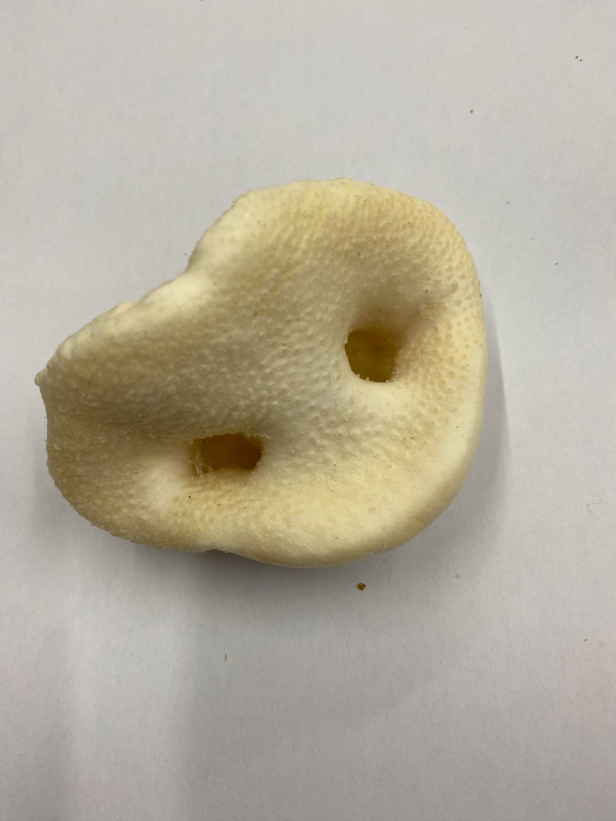 Pig Snout Puffed White