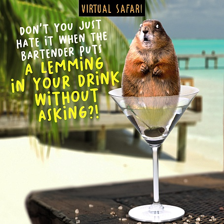 Virtual Safari Lemming Card