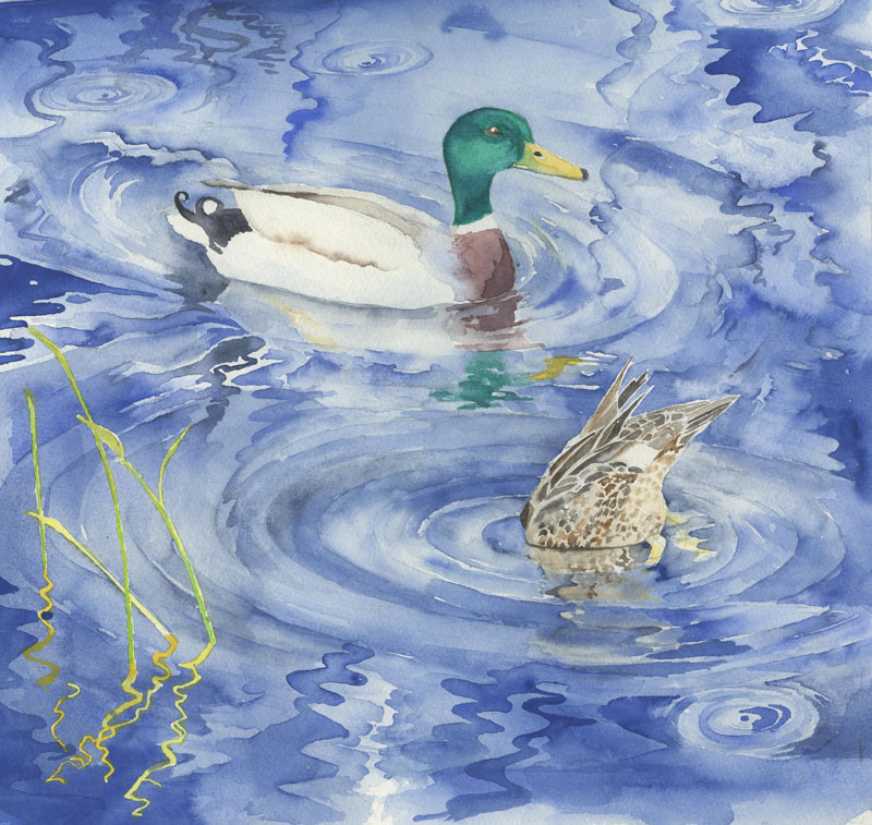 LON200, Ducking