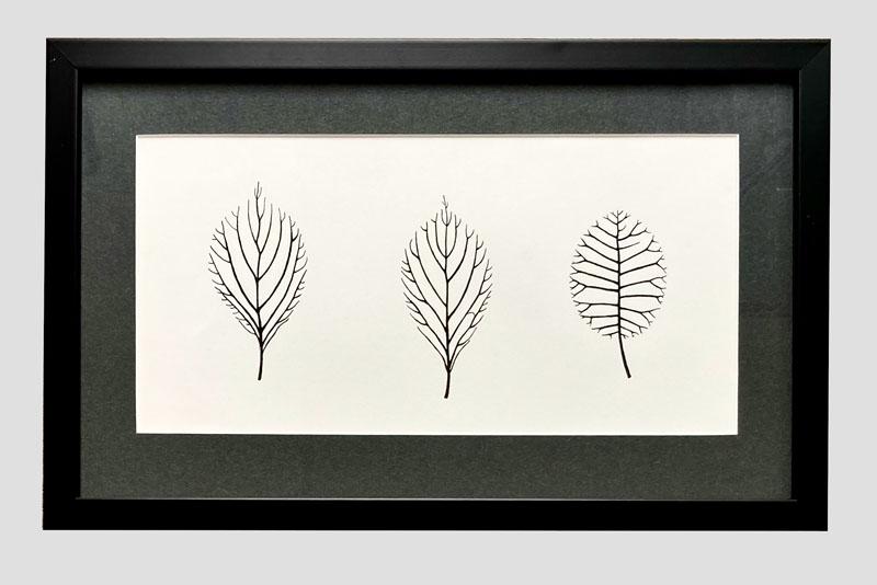 WES206, Leaves - Viburnum, Smoke Bush