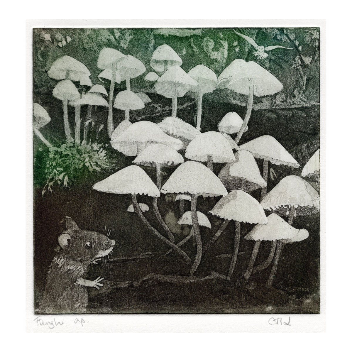 LON177, Funghi, a/p