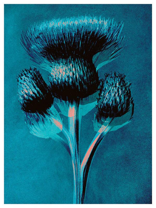 FRA100, Plantstudie 5 (1 of 5)