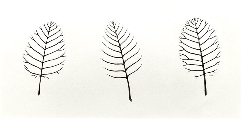 WES207, Leaves - Smoke bush, Beech