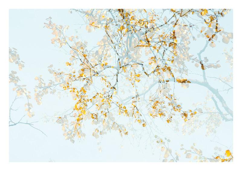 FRA039, Arborescence 2