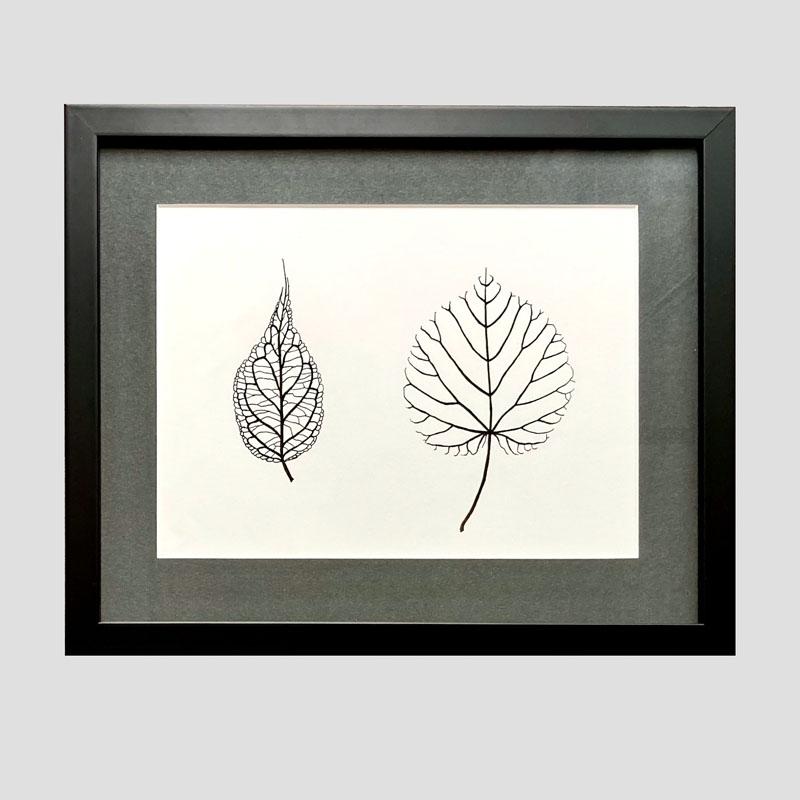 WES208, Leaves - Leycesteria, Lime