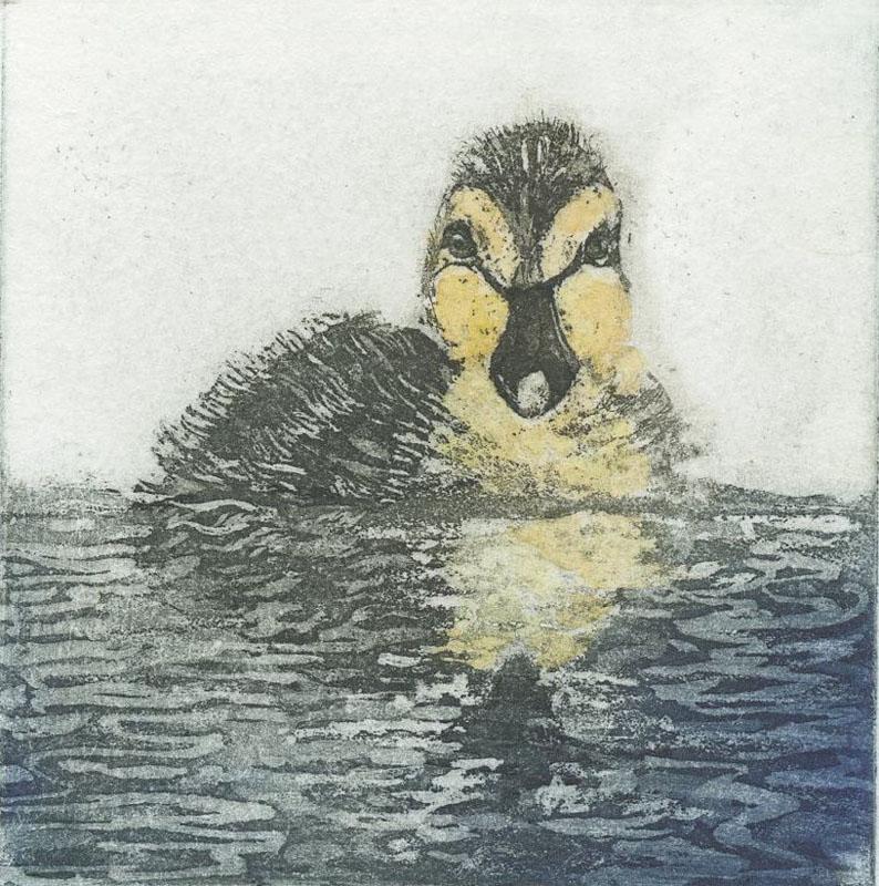 LON210, Ducking, first swim