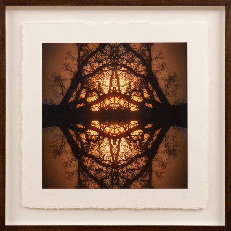 WEL203, Symmetree Oak Cathedral 55