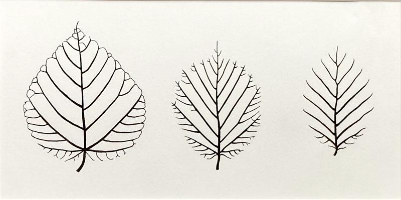 WES205, Leaves - Lime, Hazel, Beech