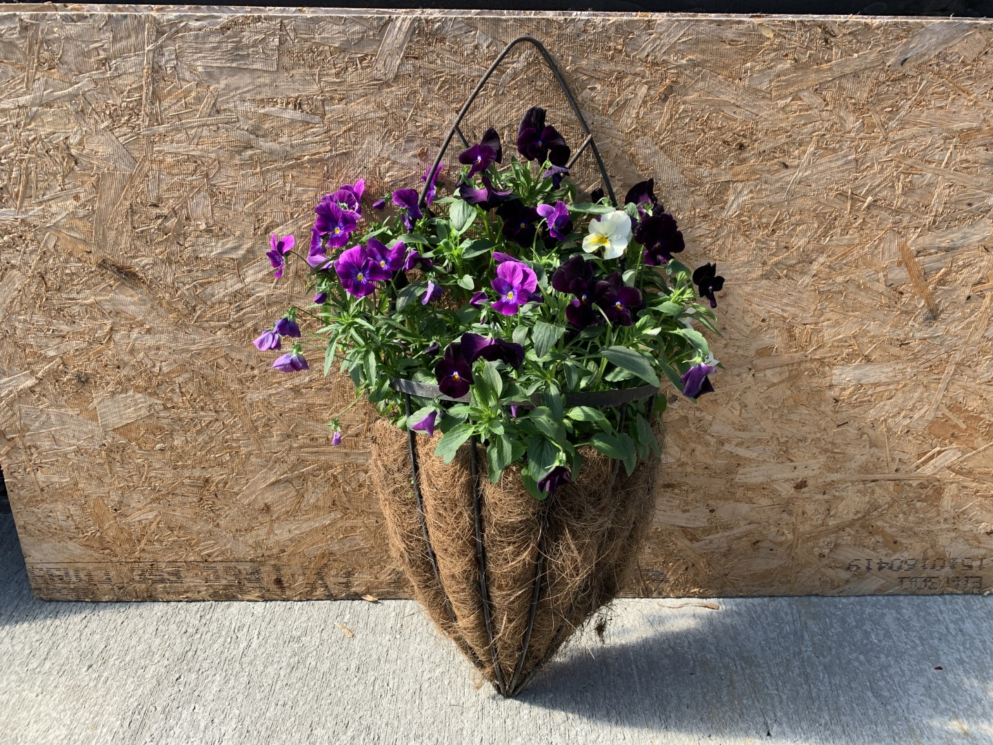 Half Cone Wall Mounted Planter - Filled