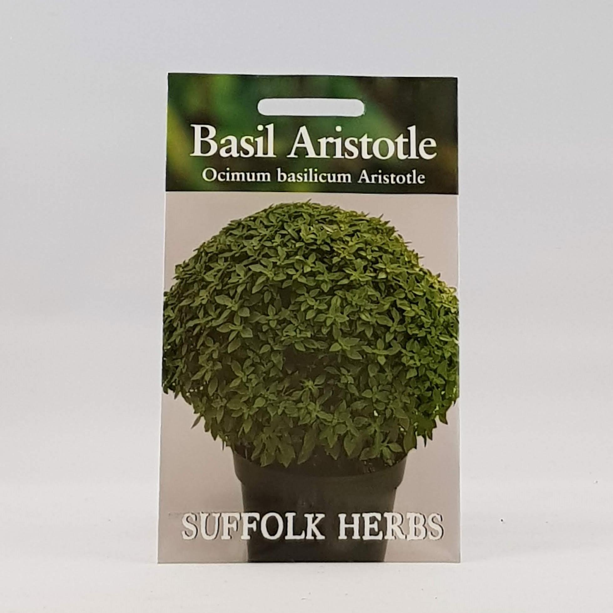 Basil Aristotle Seeds