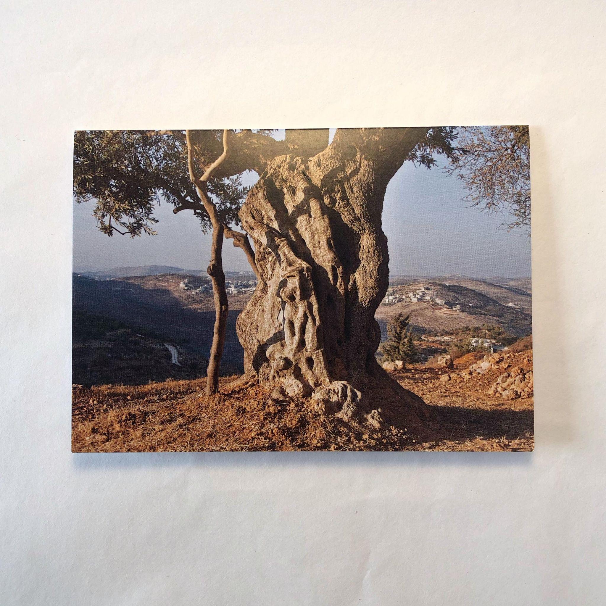 Dobbelt postkort - oliventre
