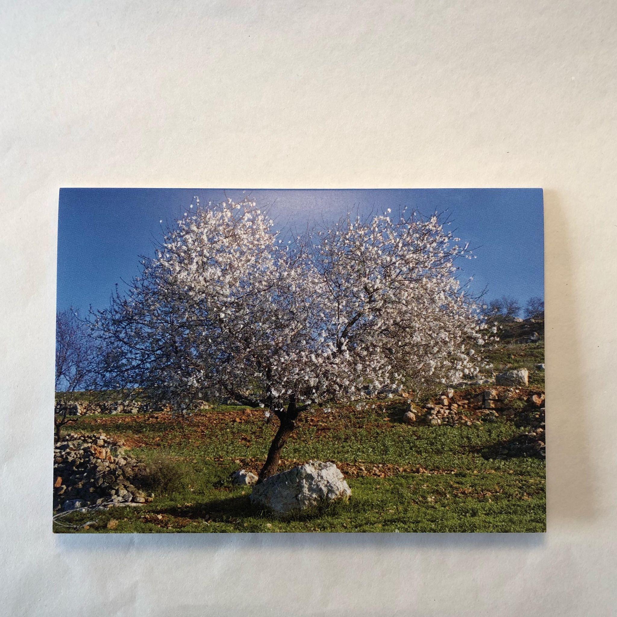 Dobbelt postkort - mandeltre