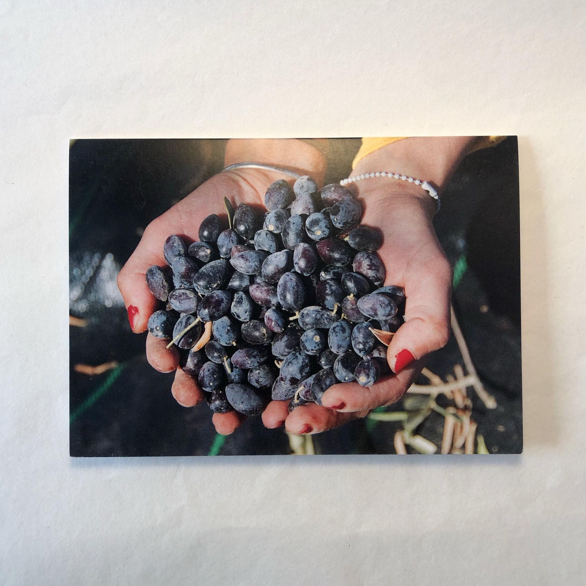 Dobbelt postkort - Olivenhøsting i Kafr Malik