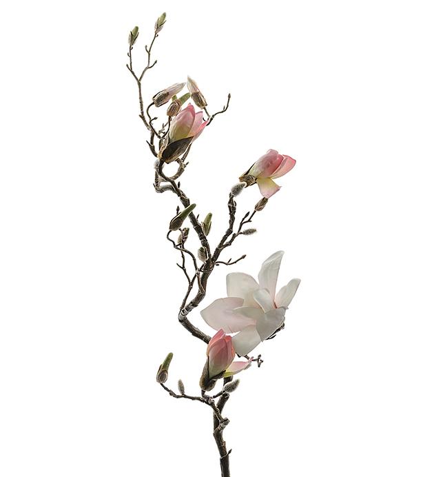 Magnolia Knoppkvist
