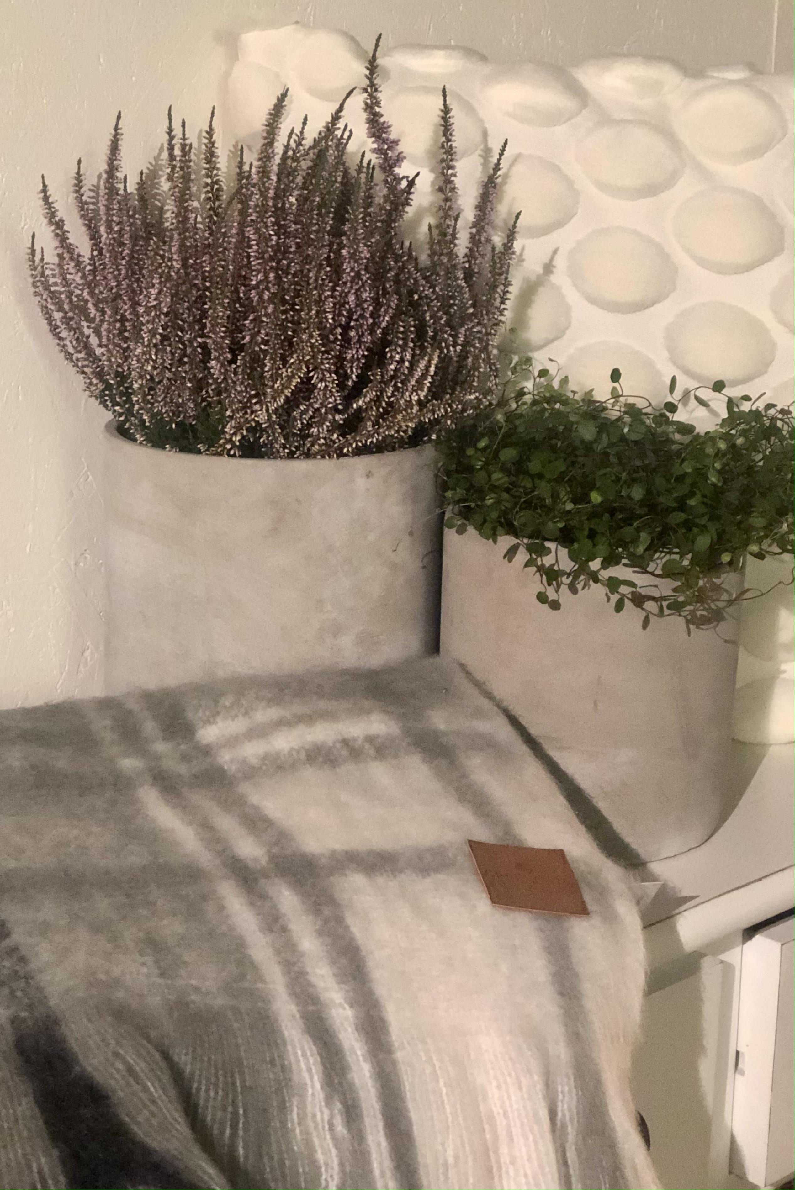 Kruka grå liten 17,5 cm hög,16 cm i diameter.