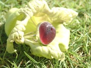 RE218 Eco-silver Sea Glass Ring Seaham Multi Reds UK R ½
