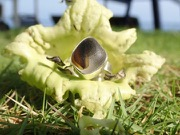 RE206 Eco-silver Sea Glass Ring Seaham  UK O