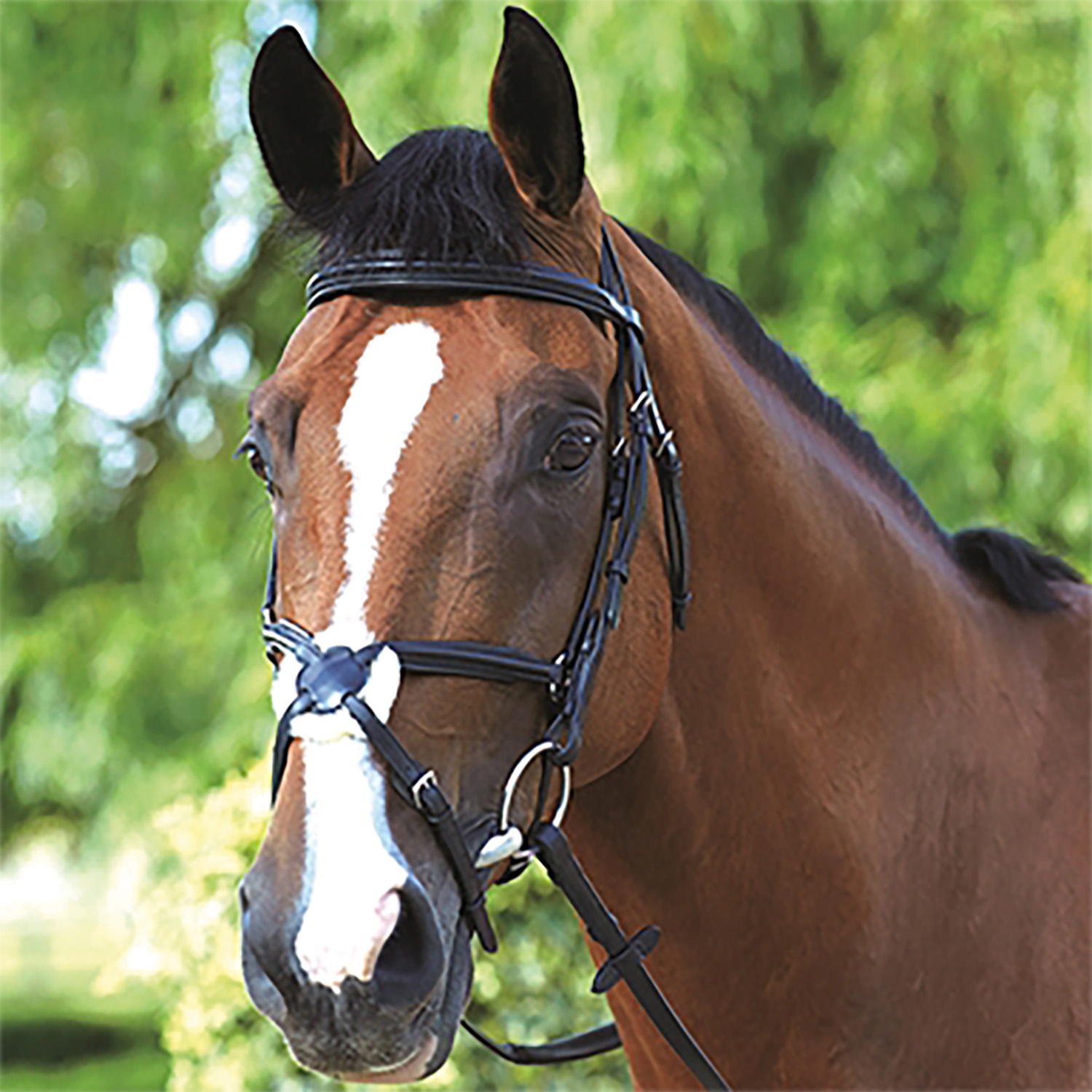 Mark Todd Comfort grackle bridle with reins