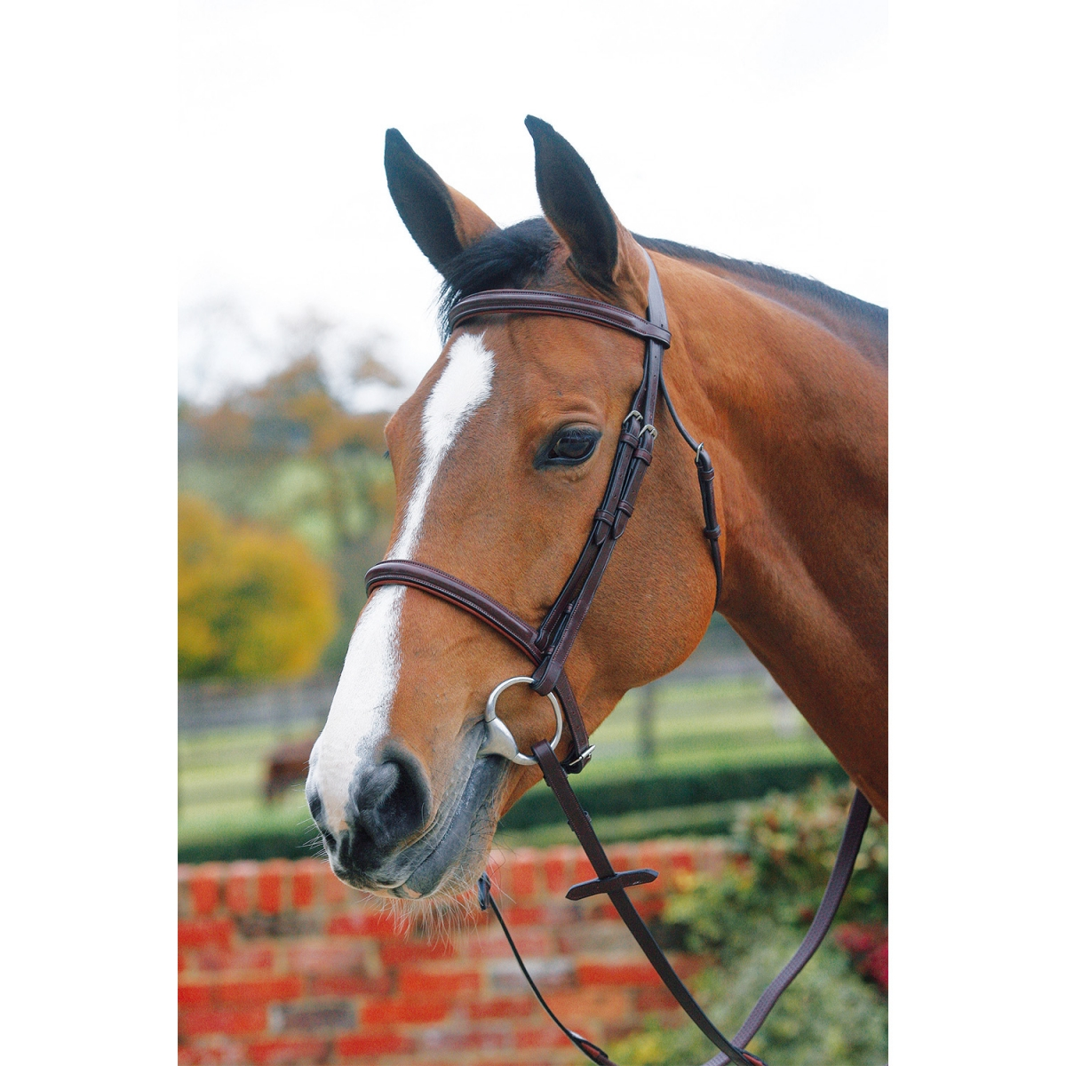 Mark Todd plain raised cavesson bridle