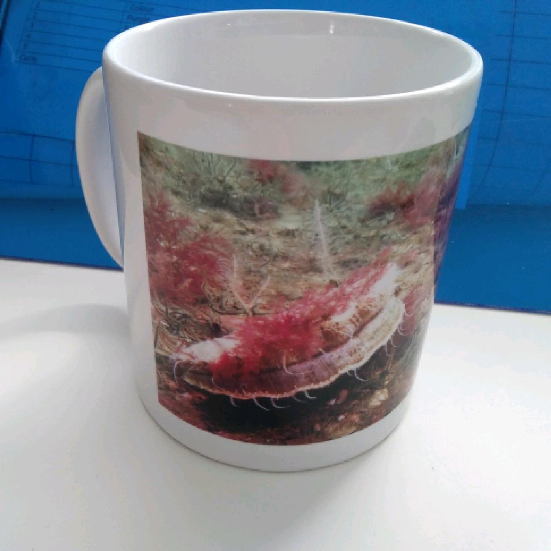 Mug - Queen Scallop with Black Brittlestars