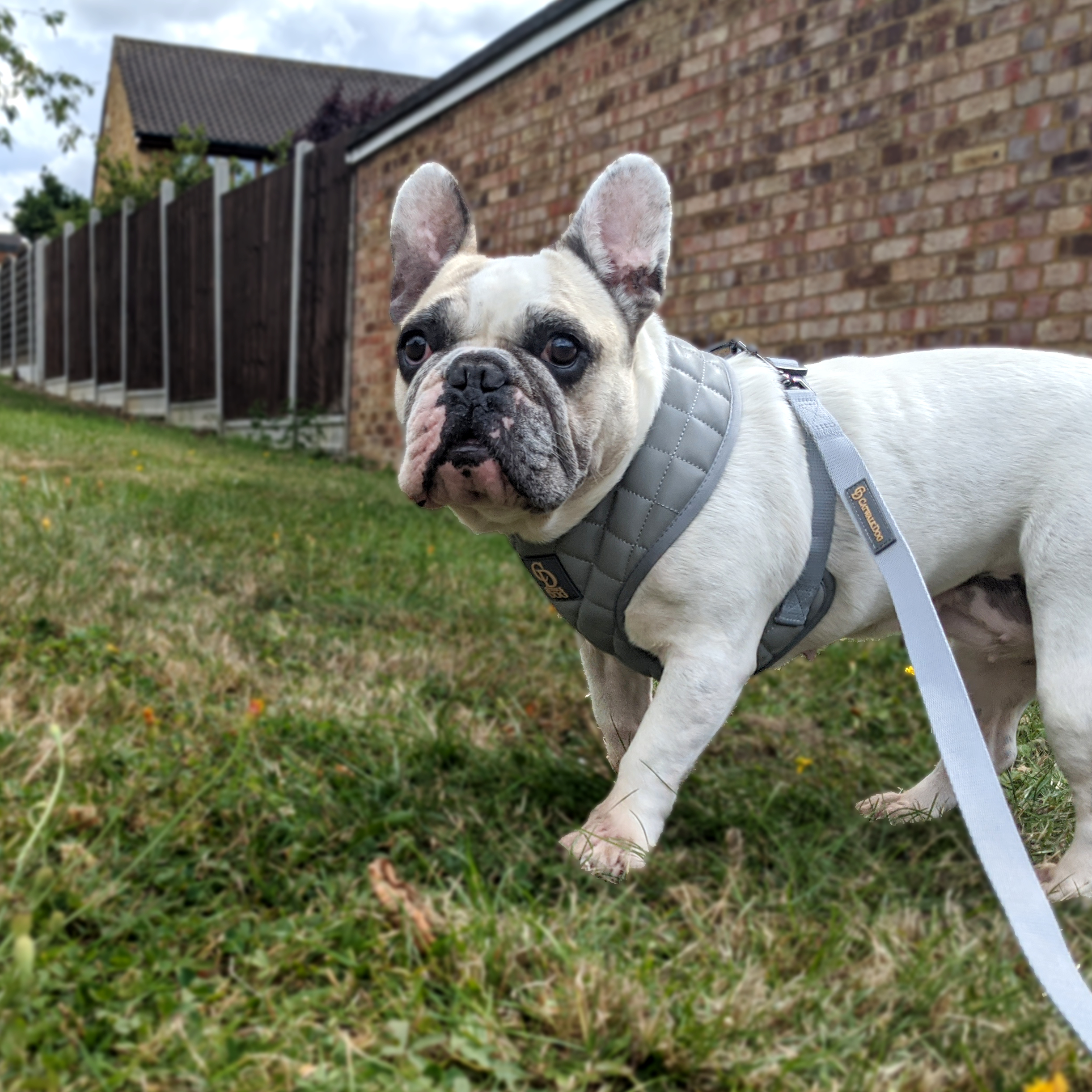 Paris grey quilted harness