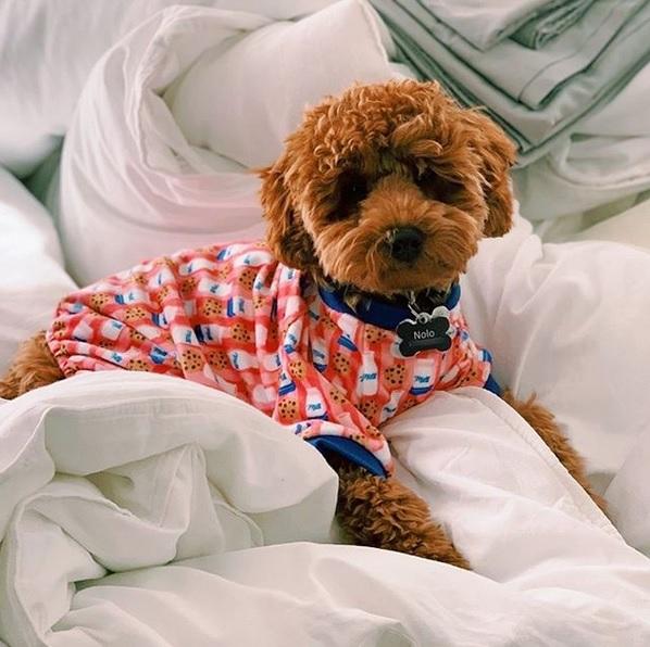 Milk & cookie dog pyjamas