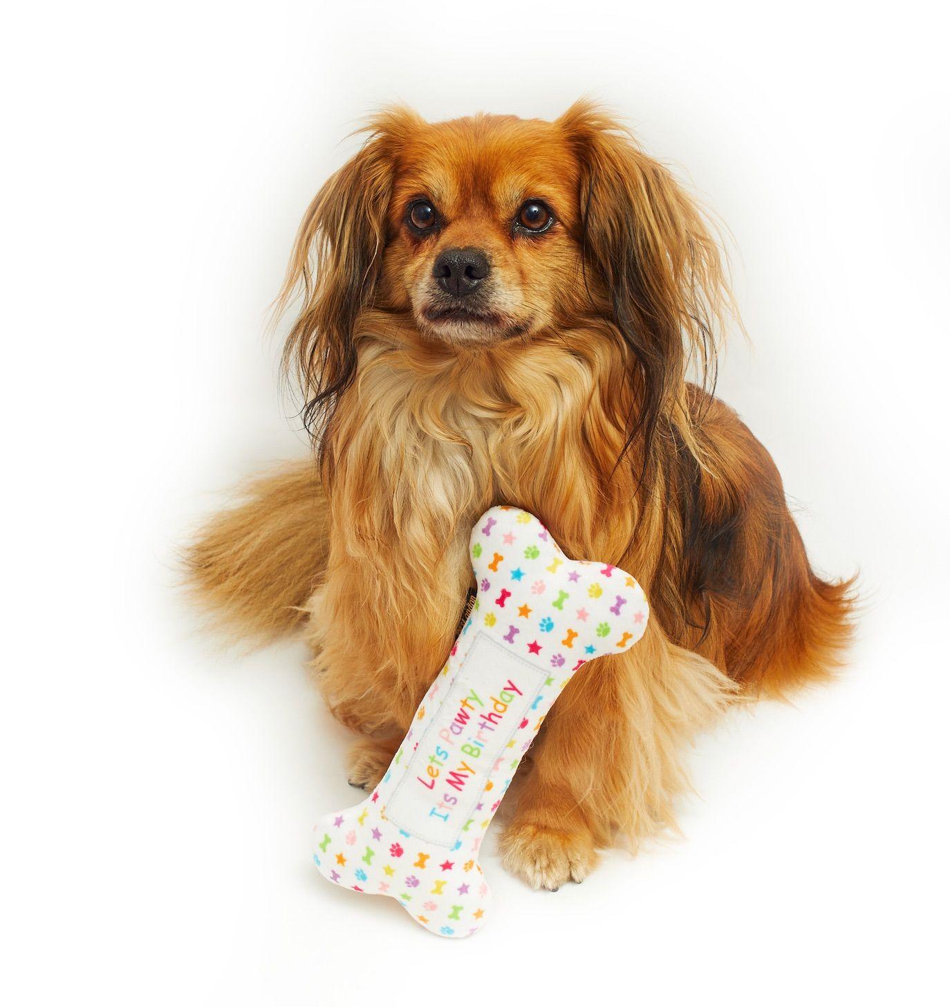 Let's Pawty bone toy
