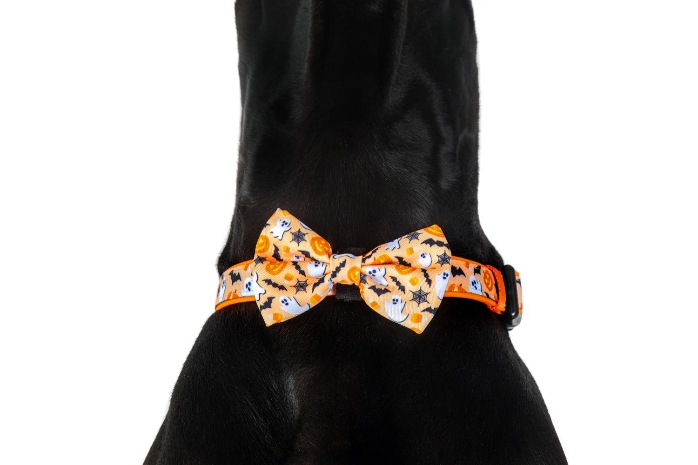 Spooky season collar & bow tie