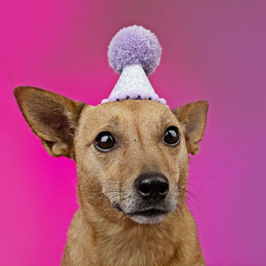 Pawty hat 18