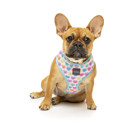Candy hearts harness