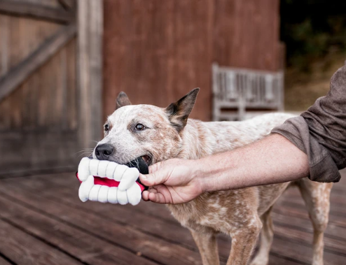 Count Dogula Fang Toy