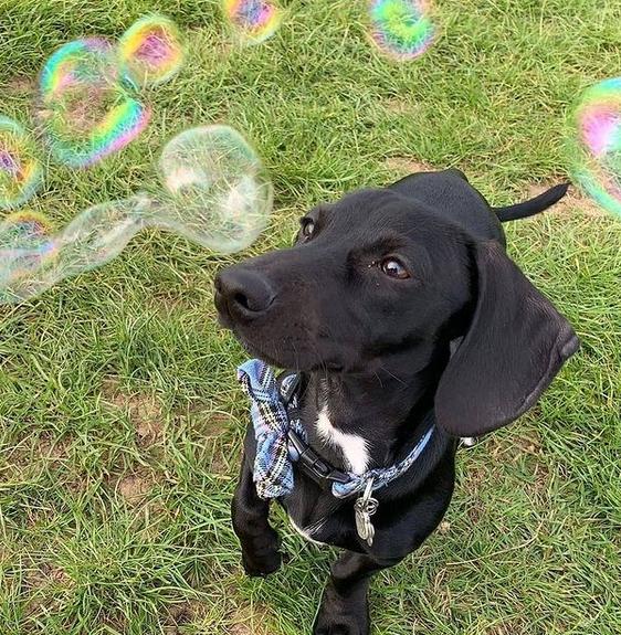 Bubble solution refil