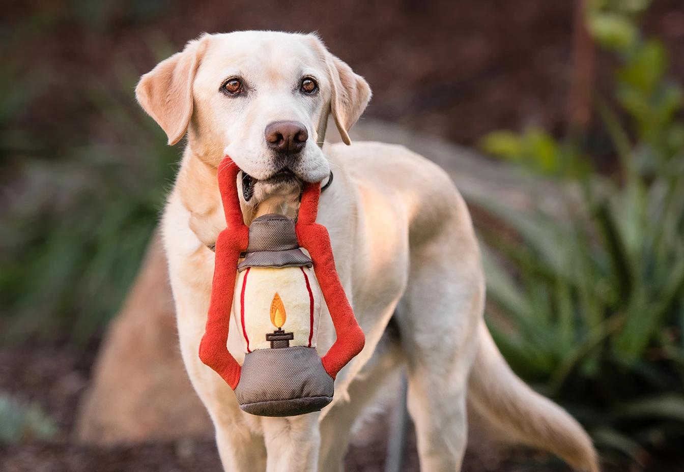 Pack leader lantern