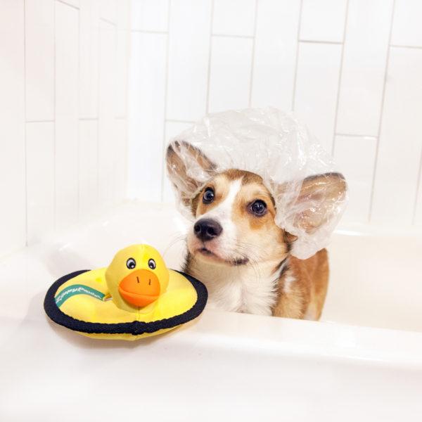 Duck floaterz
