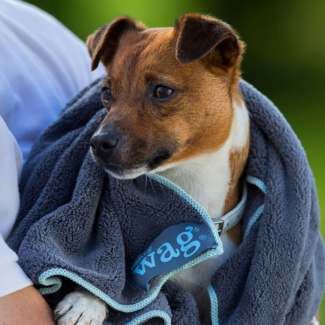 Microfibre Drying pet towel