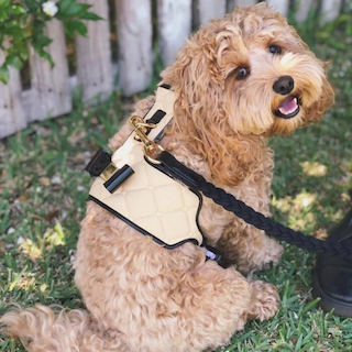 """The """"Coco"""" Dog Harness"""