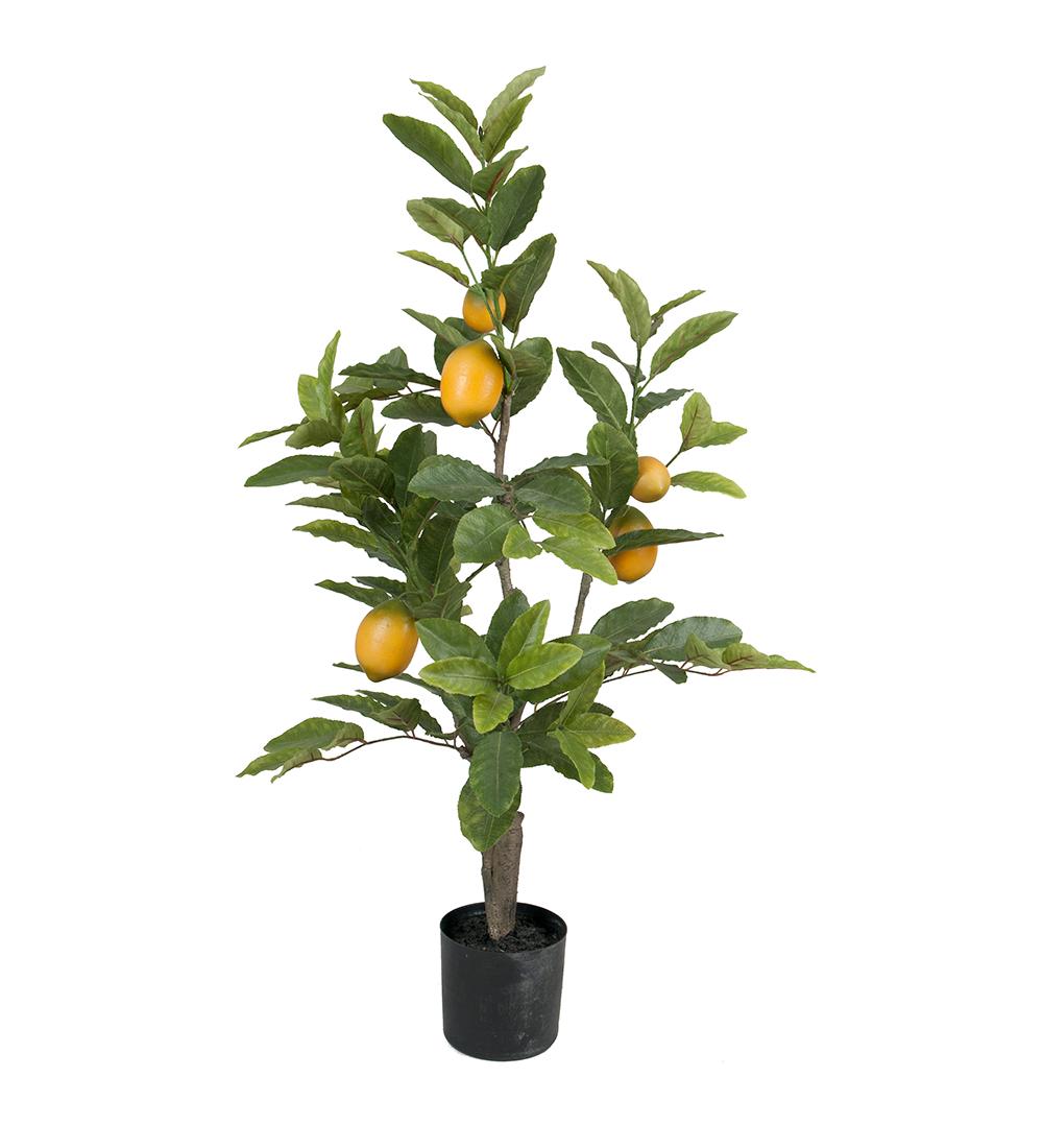 Citronträd 90cm