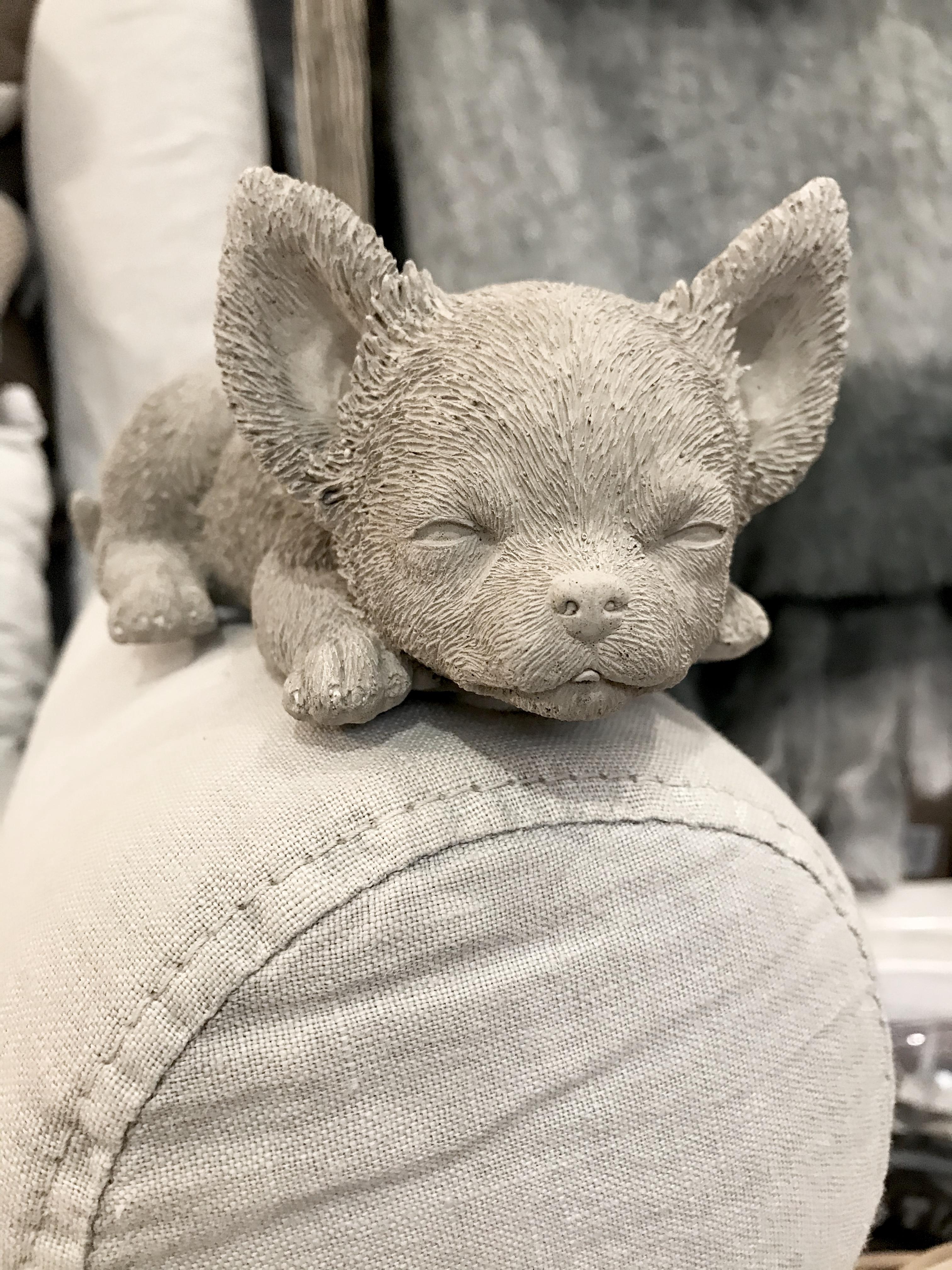 Hund sovande Chihuahua  i betong