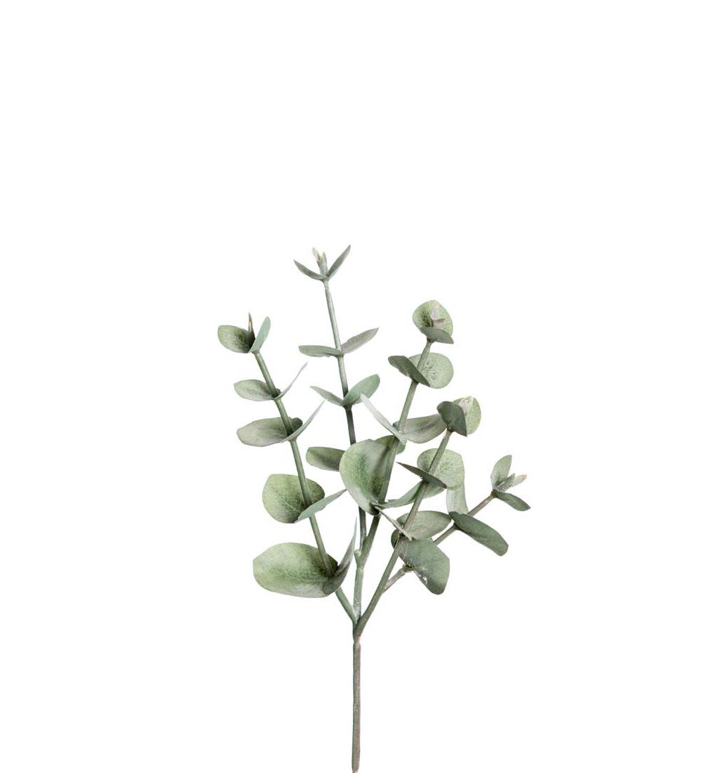 Eucalyptus 24cm