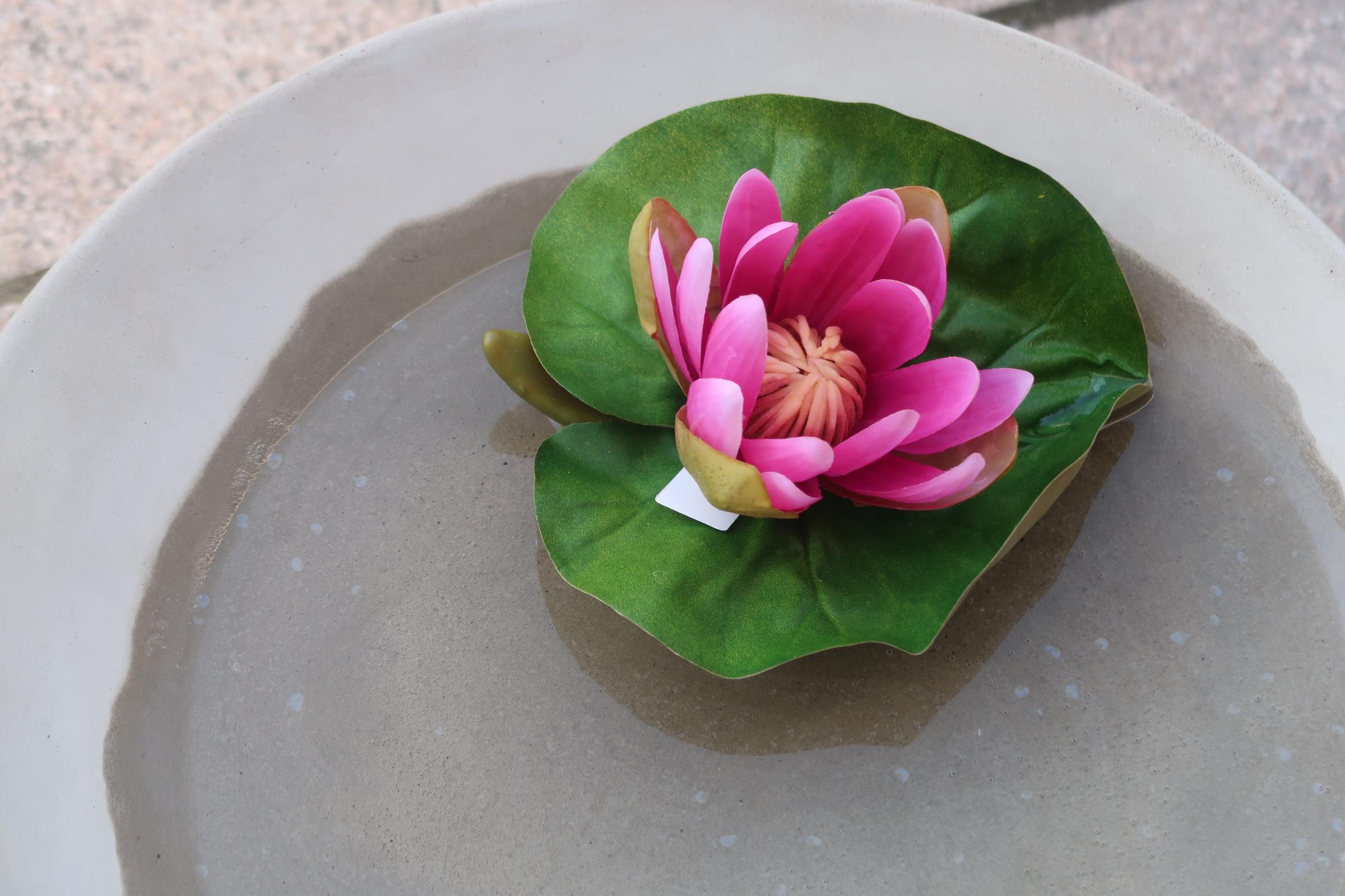 Lotusblomma fuscia stor