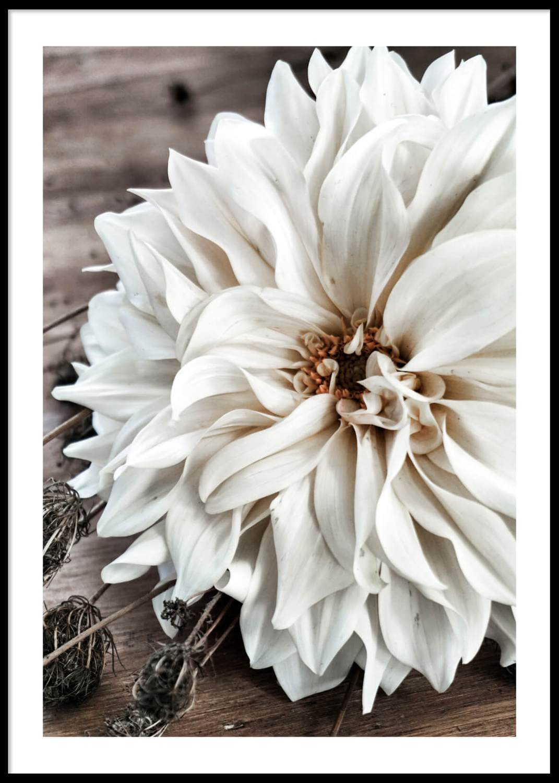 Big white flower poster, 50X70cm