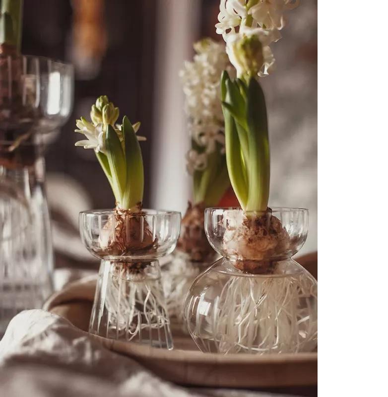 Vas för hyacinter etsad rand Strömshaga