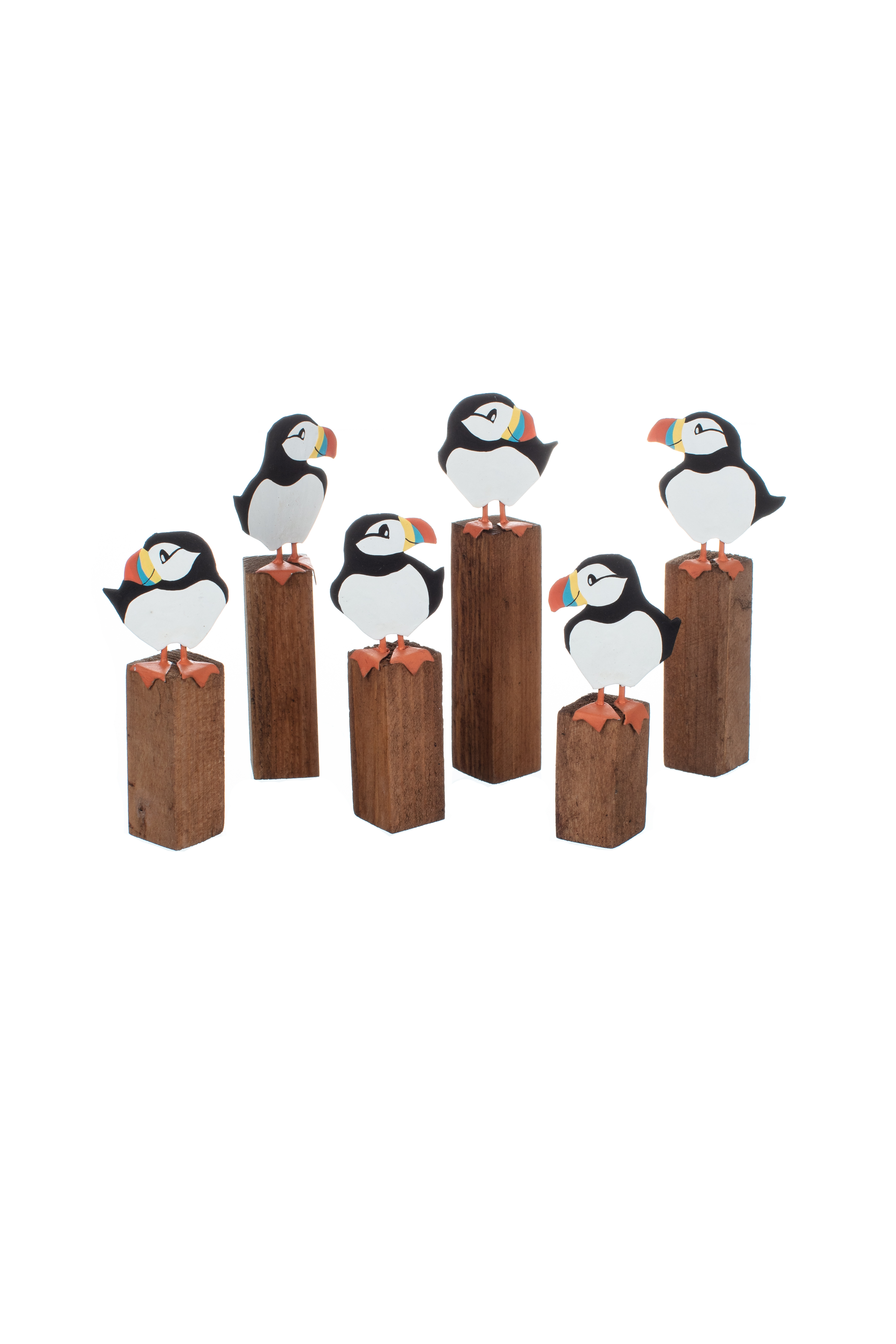 Mixed Puffins on Driftwood