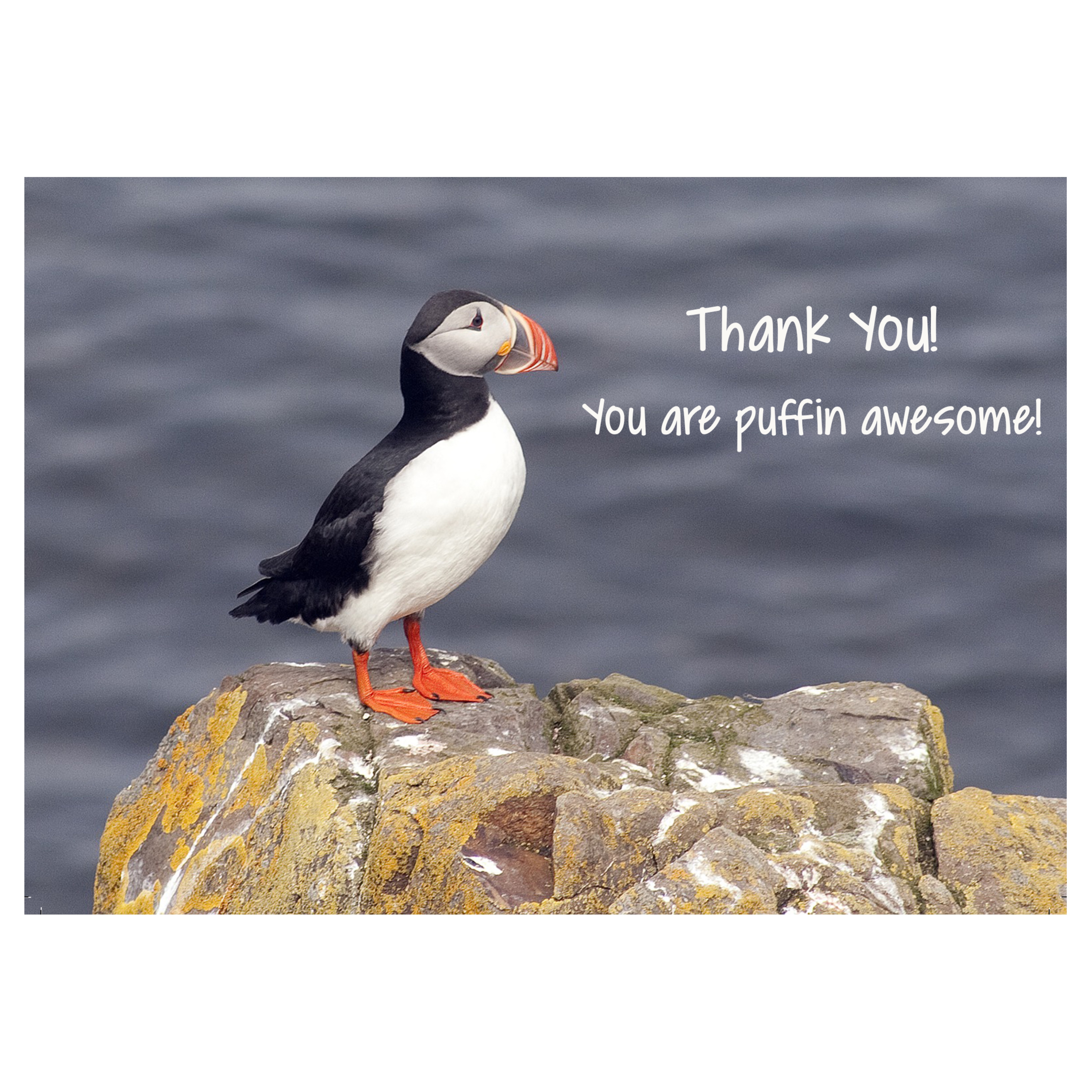 L57 Card: Thank You Puffin